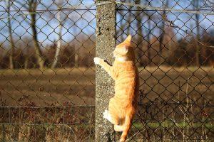 cat fence
