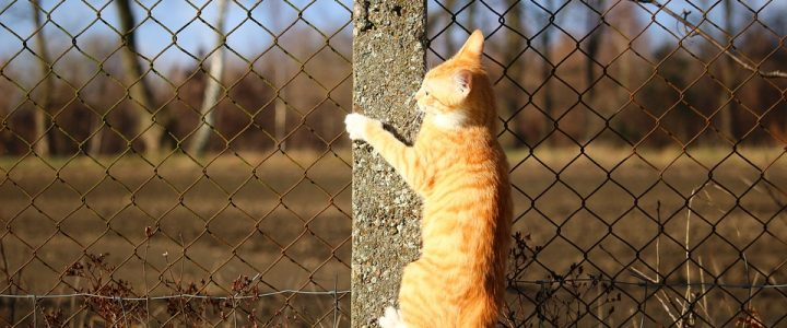 Tips for Choosing the Right Cat Fence