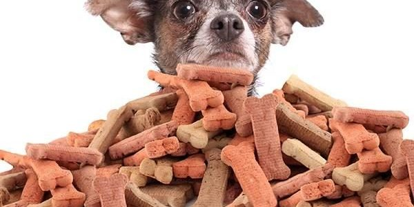 Healthy Dog Treat Options